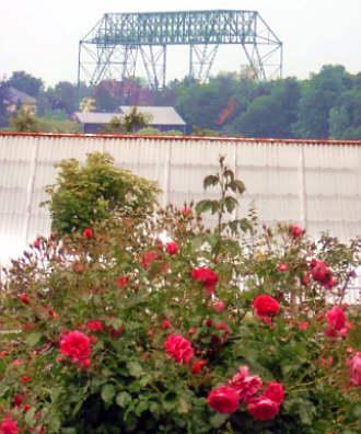 konservierte rosen box düsseldorf